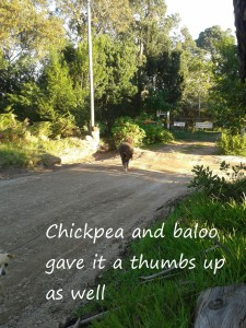 Chickpea and Baloo gave it the thumps up as well2