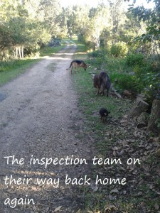 The inspection team on their way back home again2