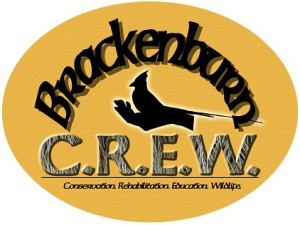 Brackenburn Logo, cropped small